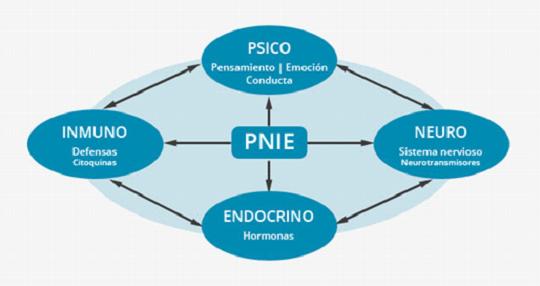 PsicoNeuroInmunología_esquema