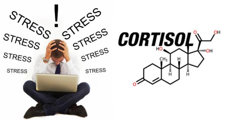cortisol_estres